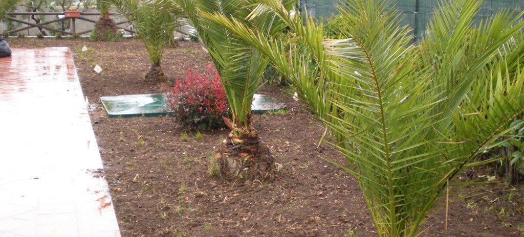 realizzazione giardino in villa